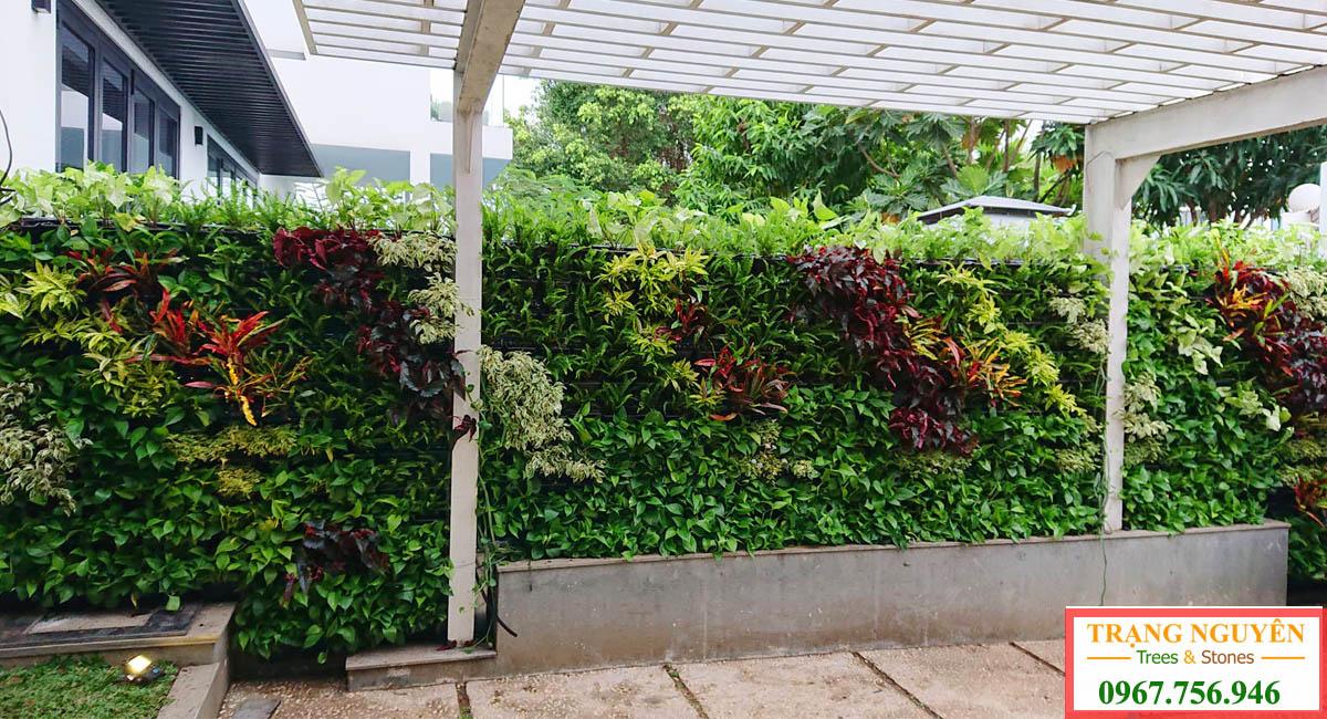 Thiết kế tường cây xnah